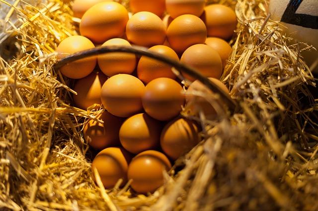 Vajcia z domáceho chovu