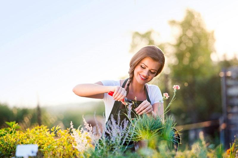 Záhrada a starostlivosť