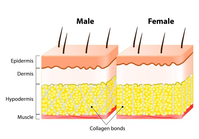 Usporiadanie podkožného väziva u mužov a žien